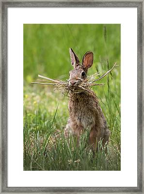 Rabbit Collector  Framed Print by Terry DeLuco