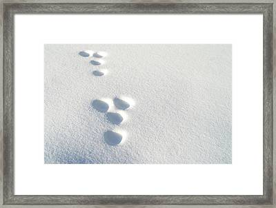 Rabbit Footprints In The Snow 2 Framed Print by Jack Dagley