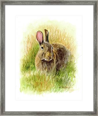Rabbit In Tall Grass Framed Print