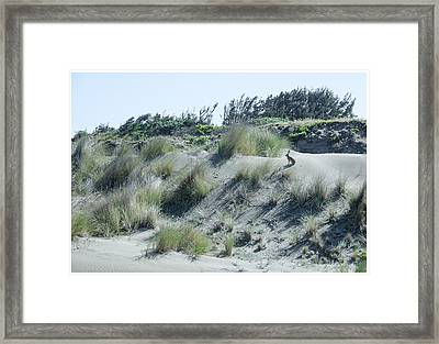 Rabbit Run Framed Print