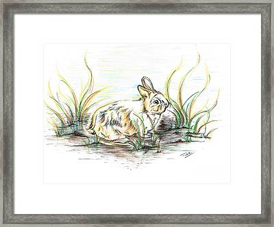 Rabbit So Unique  Framed Print