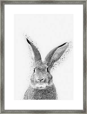 Rabbit Framed Print