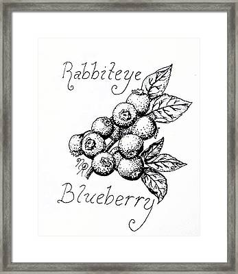 Rabbiteye Blueberry Framed Print