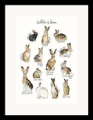 Hare Mixed Media Framed Prints