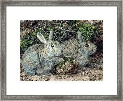 Rabbits Framed Print by John Sherrin