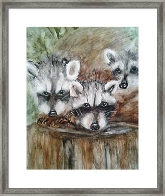 Raccoon Babies By Christine Lites Framed Print by Allen Sheffield