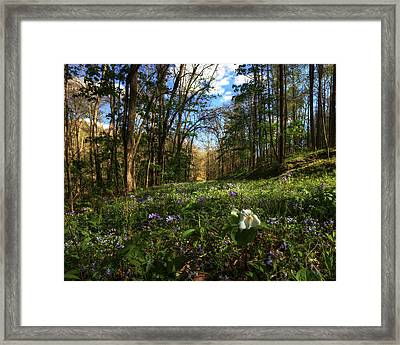 Raccoon Creek Flowers Framed Print