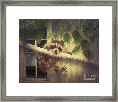Raccoon Hangin' Around Framed Print by Tim Wemple
