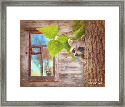 Raccoon Lookout Framed Print by Tim Wemple