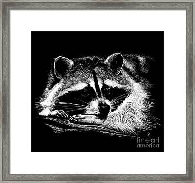 Framed Print featuring the mixed media Raccoon by Rita Silva