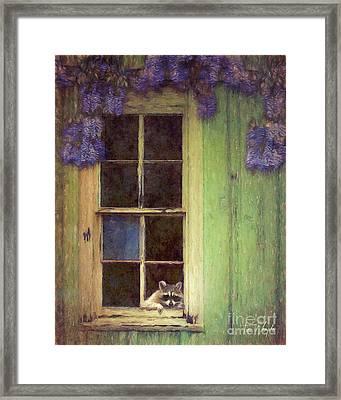 Raccoon Window Framed Print by Tim Wemple