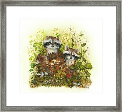 Raccoons  Framed Print by Donna Genovese