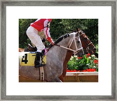 Race Horse No 4  2008 Framed Print
