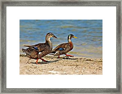 Race You To The Water Framed Print by Carolyn Marshall