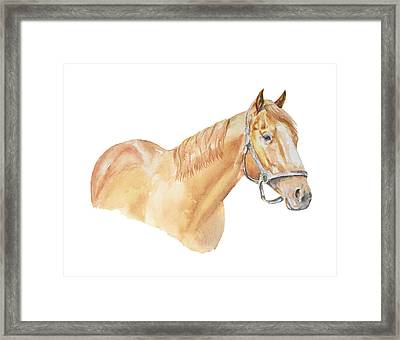 Racehorse Framed Print