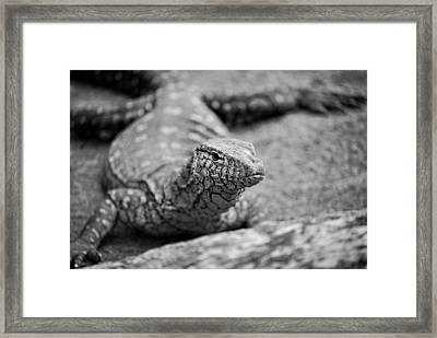 Racehorse Goanna - Black And White Framed Print by Michelle Wrighton