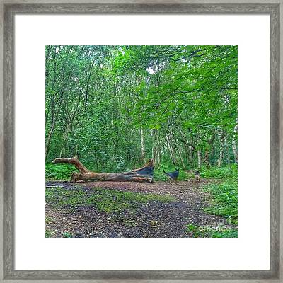 Racing Around The Downed Tree Framed Print by Isabella F Abbie Shores FRSA