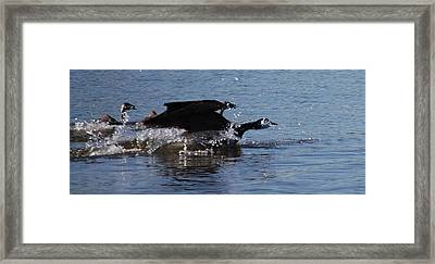Framed Print featuring the photograph Racing Geese by Sumoflam Photography