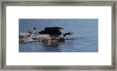 Racing Geese Framed Print
