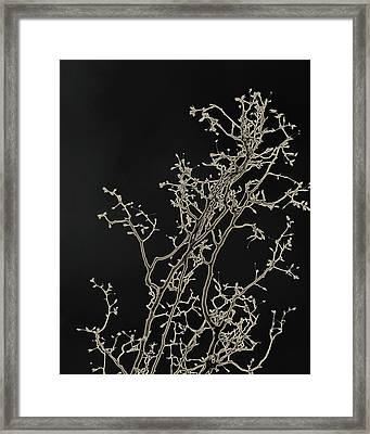 Radiance Framed Print by Slade Roberts