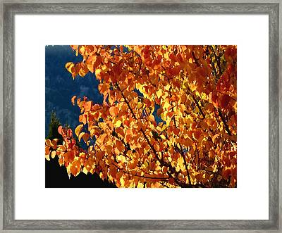Radiant Apricot Leaves Framed Print by Will Borden