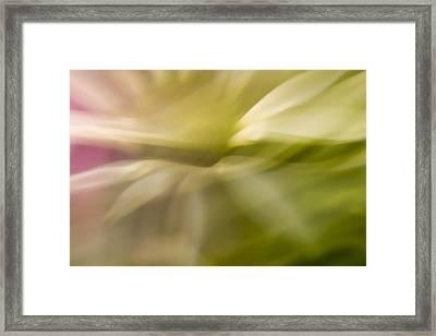 Radiant Coneflower Framed Print