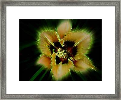 Radiant Daylily Framed Print by Shirley Sirois