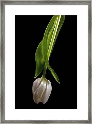 Radiant Framed Print by Elsa Marie Santoro