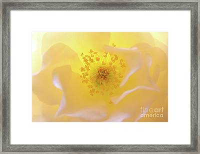 Radiant Gift Framed Print by Julia Hiebaum