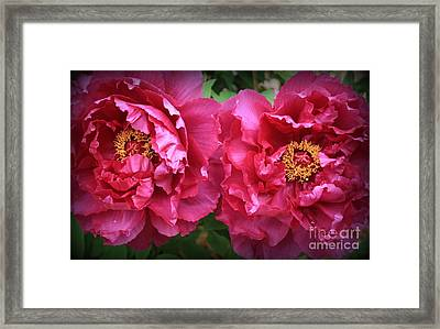Radiant In Magenta - Peonies Framed Print by Dora Sofia Caputo Photographic Art and Design
