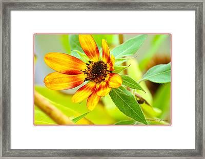 Radiant Morning Framed Print