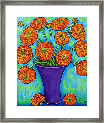 Radiant Ranunculus Framed Print by Lisa  Lorenz