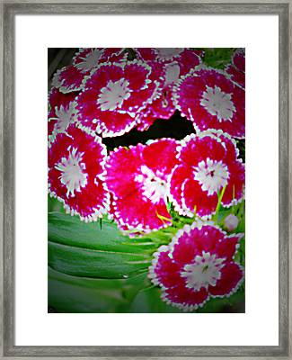 Framed Print featuring the photograph Radiant Red  by Debra     Vatalaro