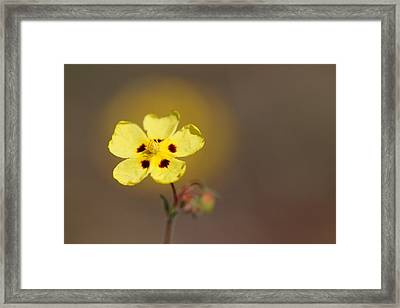 Framed Print featuring the photograph Radiate by Richard Patmore