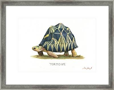Radiated Tortoise  Framed Print by Juan Bosco