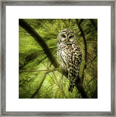 Radiating Barred Owl Framed Print by Jean Noren