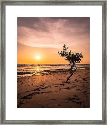 Radiating Framed Print by Clay Townsend