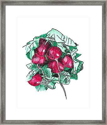 Radishes Framed Print by Masha Batkova