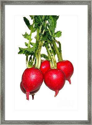 Radishes Framed Print by Olivier Le Queinec