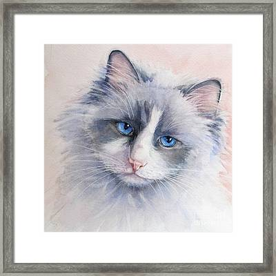 Ragdoll Cat Framed Print