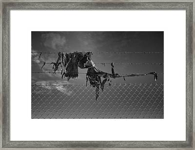 Ragged On A Fence Framed Print