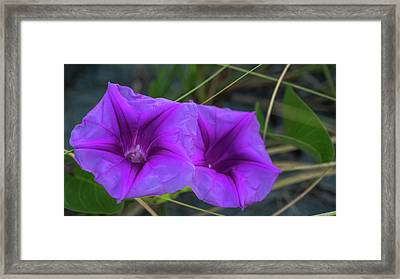 Railroad Vine Flowers Delray Beach Florida Framed Print by Lawrence S Richardson Jr