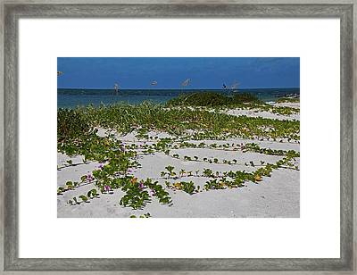 Railroad Vines On Boca IIi Framed Print