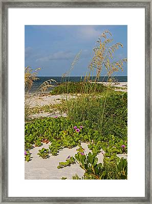 Railroad Vines On Boca Iv Framed Print