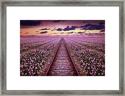 Railway In A Purple Tulip Field Framed Print
