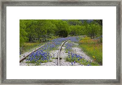 Railway Wildflowers Framed Print
