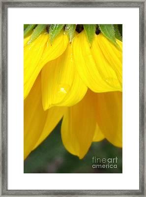 Rain And Sunshine On A Colorado Wildflower Framed Print