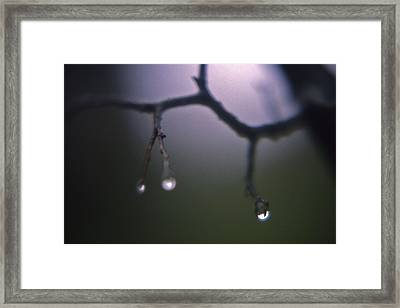 Rain At Radnor Framed Print by Randy Muir