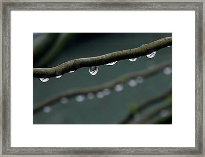 Rain Branch Framed Print by Photography by Gordana Adamovic Mladenovic
