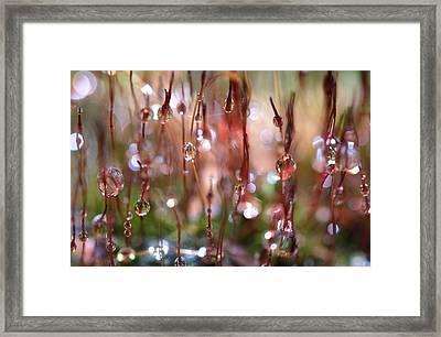 Rain Catcher Framed Print